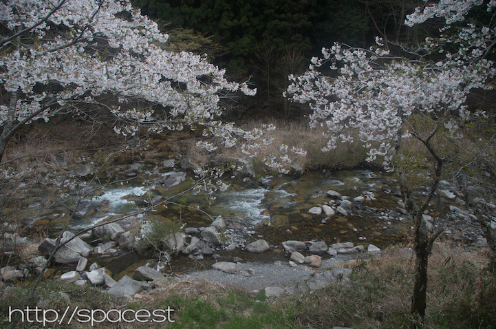 Cherry Blossoms River 4.jpg