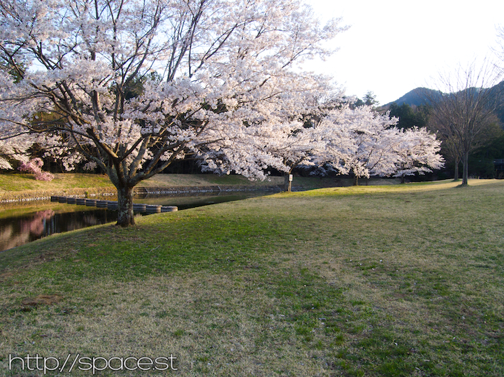 The cherry blossoms have also started to bloom at the nearby park.