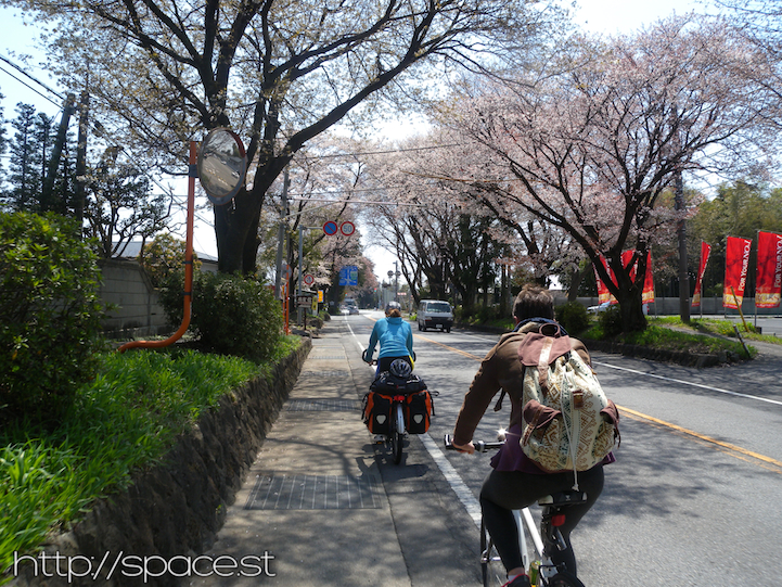 cycling canopies of Cherry Blossoms Nikko Kaido