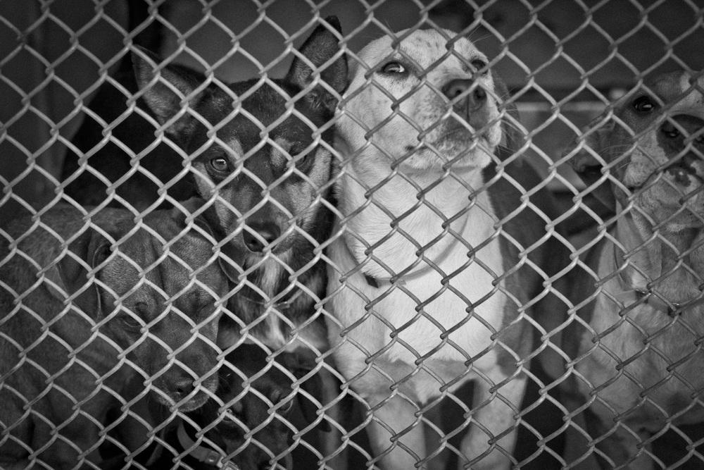 Downey Animal Shelter
