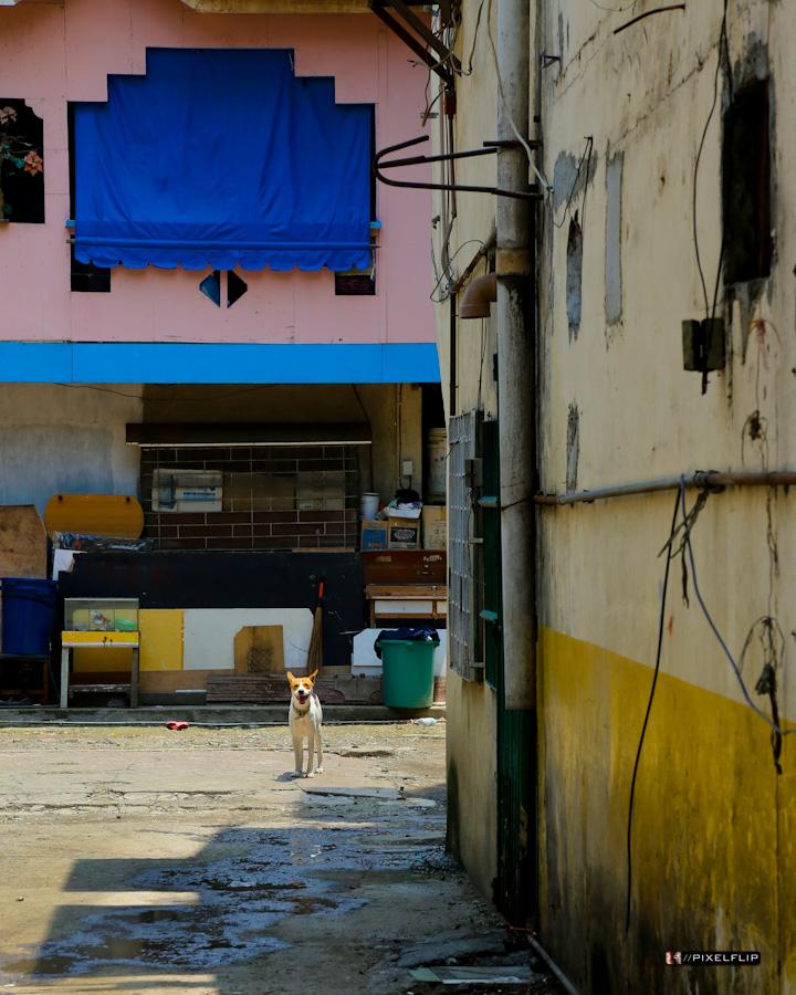 Cebu_Dogs-3-2.jpg