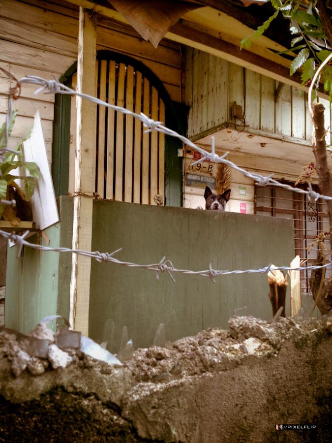 Cebu_Dogs-13.jpg