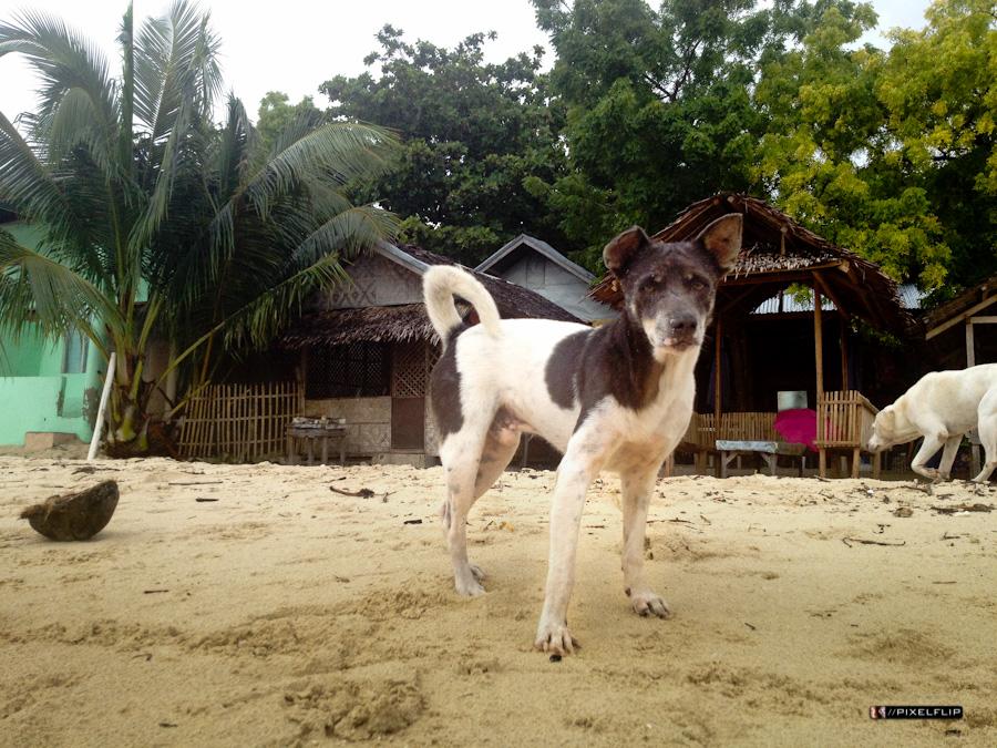 Cebu_Dogs-4.jpg