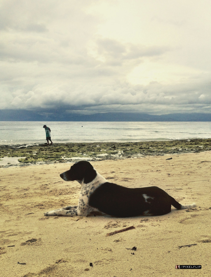 Cebu_Dogs-6.jpg