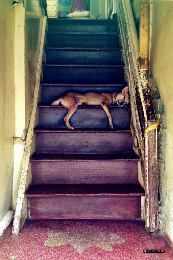 Cebu_Dogs-7.jpg