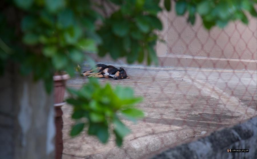 Cebu_Dogs-5-2.jpg