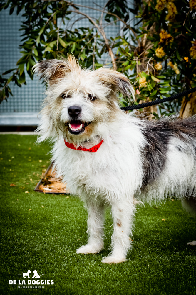 Hi my name is Sandy. A1430760   I am a 1 year old, spayed female, tricolor Terrier mix. I have been at the shelter since Oct 11, 2013. PLEASE come meet me!    1850 West 60th street    Los Angeles, CA 90047   L.A. 90018   (213) 485-0214