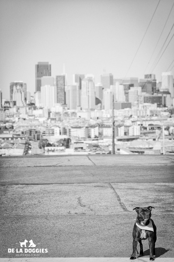 Izzy//San Francisco