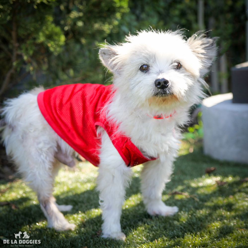 My name is Brucey A1531373 and I am a ten year old Terrier mix.    I am currently in medical. Come visit me!     1850 West 60th street Los Angeles, CA 90047 L.A. 90018 (213) 485-0214 (213) 485-0227 (213) 485-0303