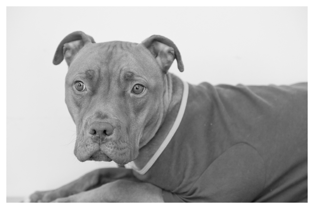 Chavela A1698960 This baby girl is sooo sweet! Chvela is extremley under weight -37 pounds. She is 2 years old and currently in medical! Please come visit her!