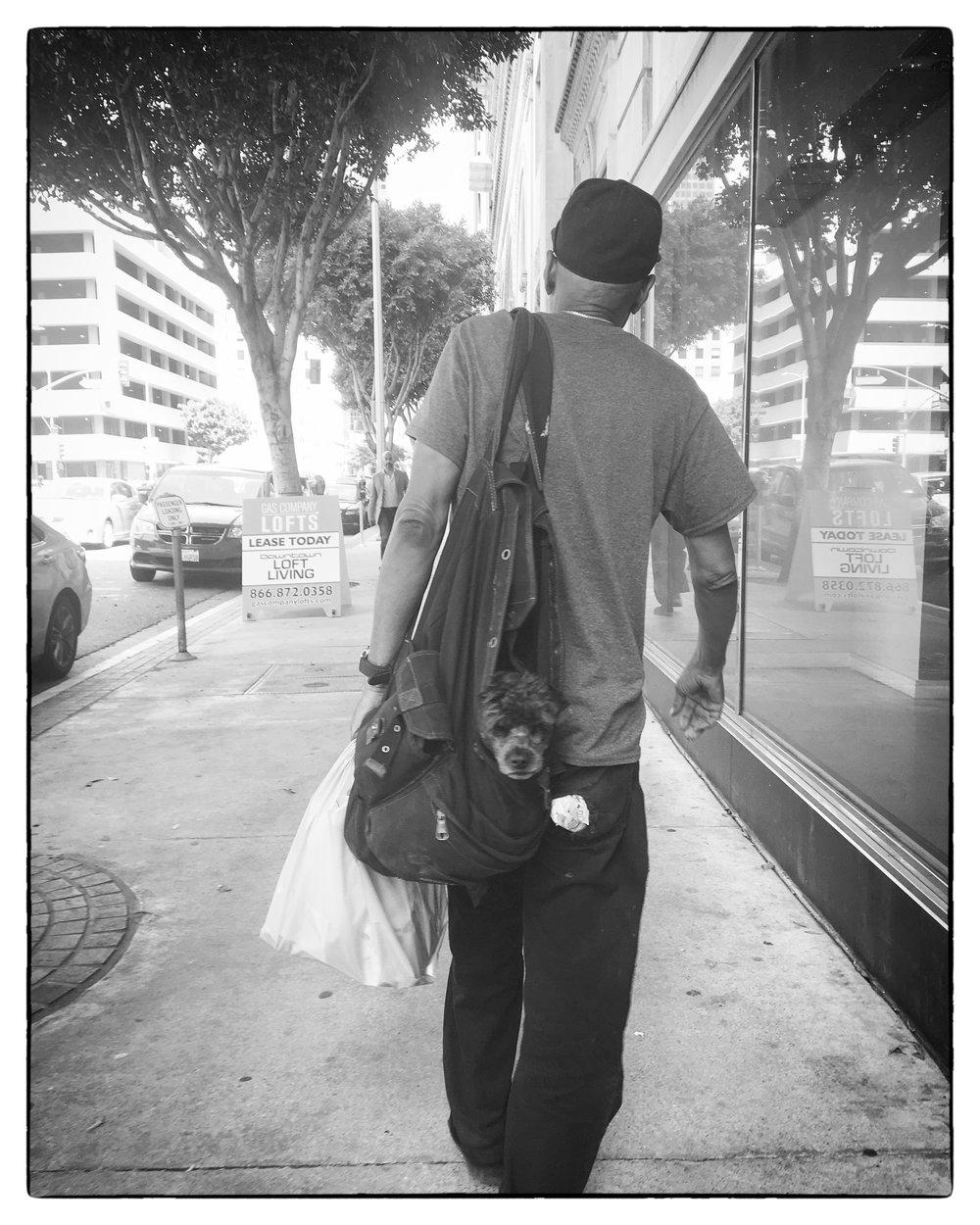 dog bag.jpg