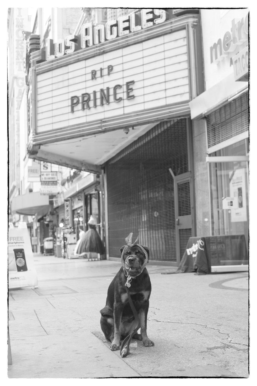 RIP Prince.jpg