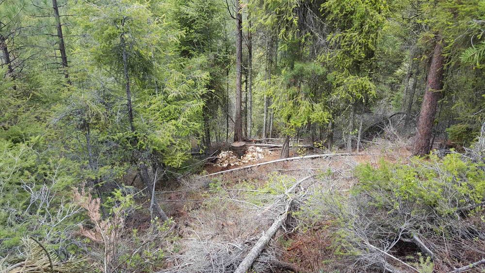 View from the treestand