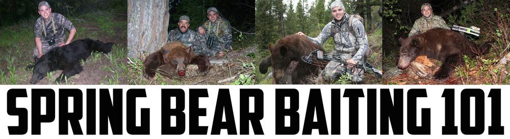 bear baiting 101.jpg