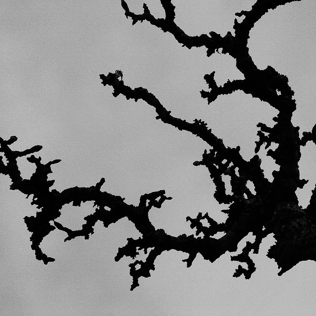 Winter Branches   Seattle, Washington  © Alan Wentworth