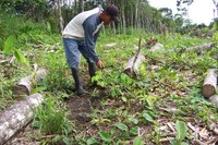 Liriano clears around one of the baby rosewood saplings that the community planted through the SGP program