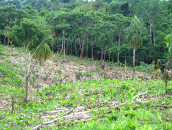 Deforested land in Arimae's reserve to be replanted