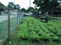 Photo of Arimae's native tree species nursery