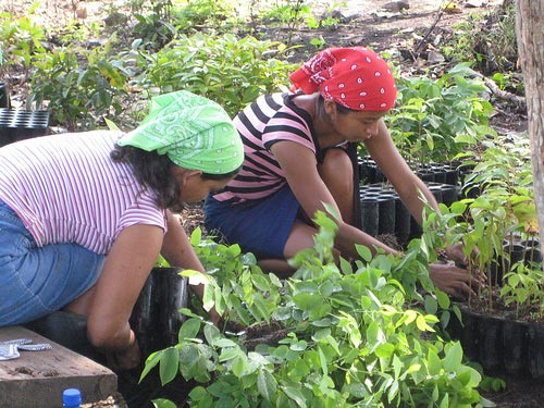 Photo of women sorting native species saplings in Darien Panama
