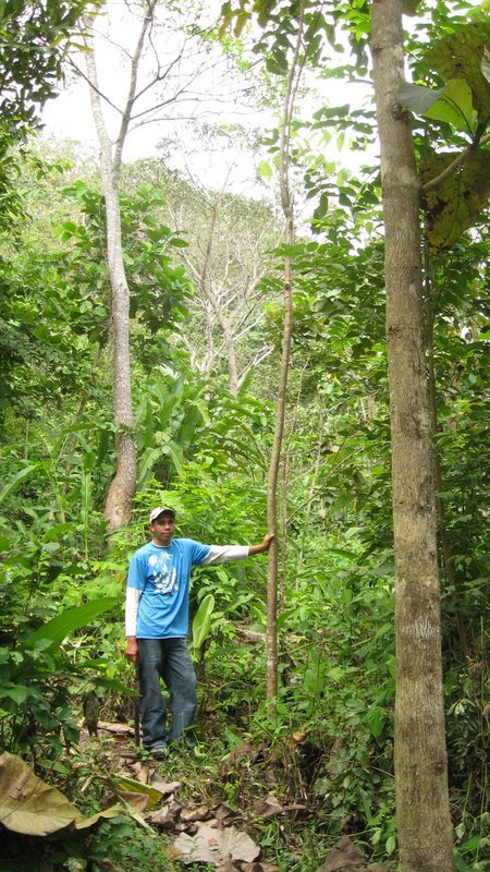 Jose (Ino) stands with an Almendro tree in the Nuevo Paraiso plantation