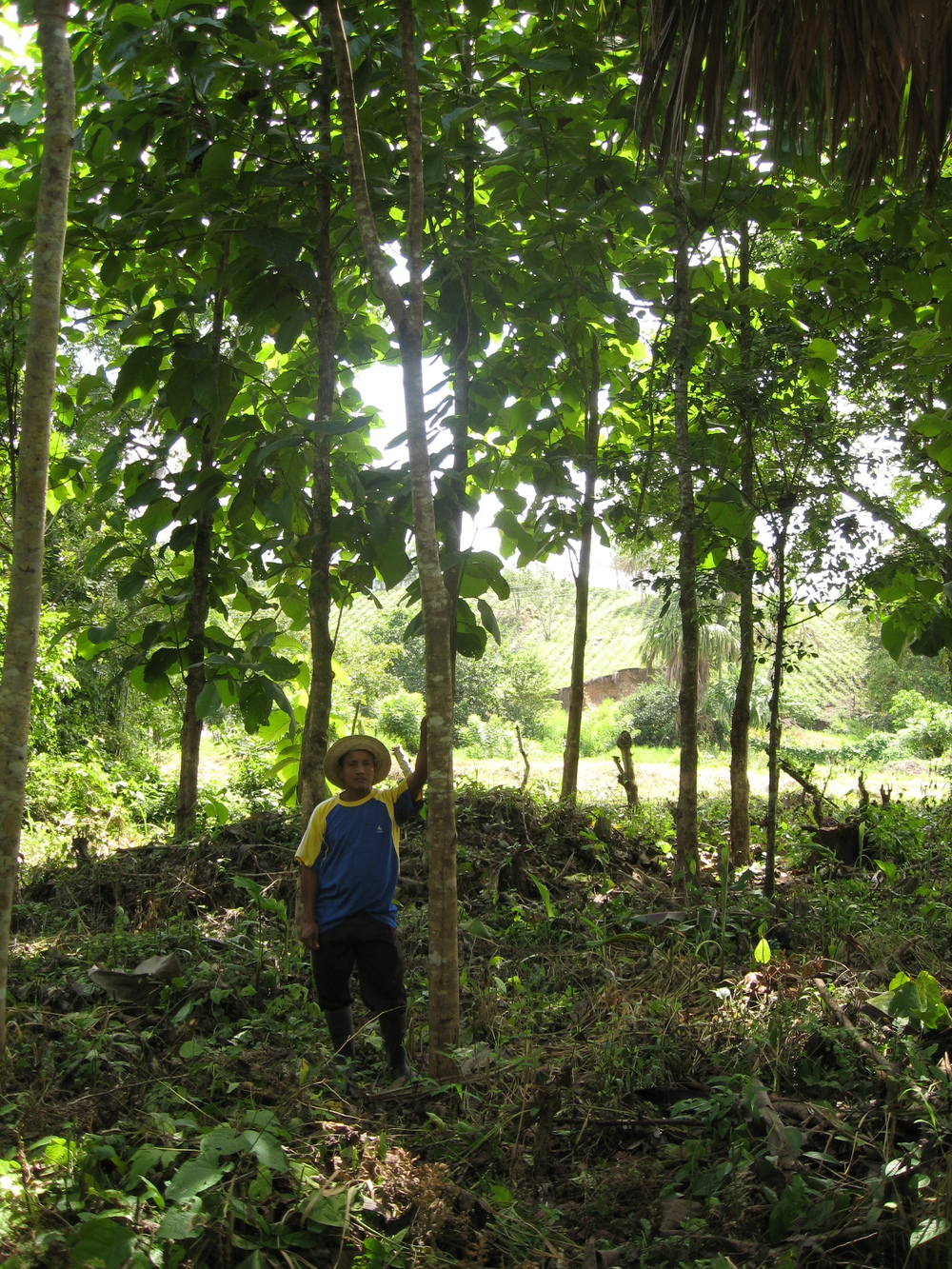 Tropical Woods Planting Empowerment