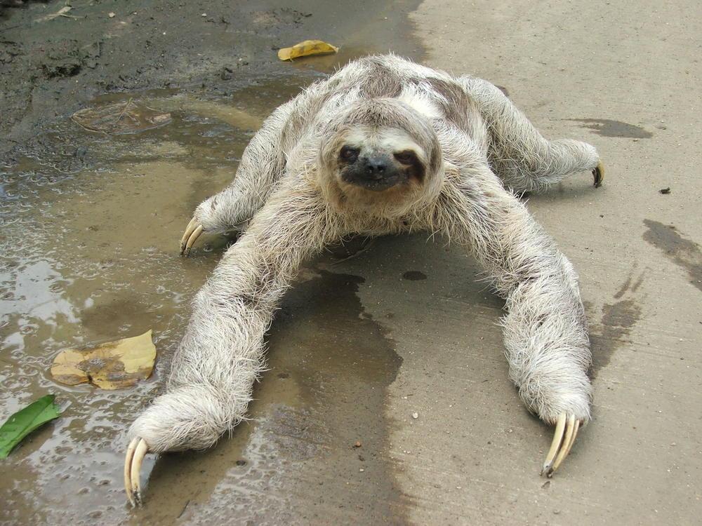 3_toed_sloth.JPG