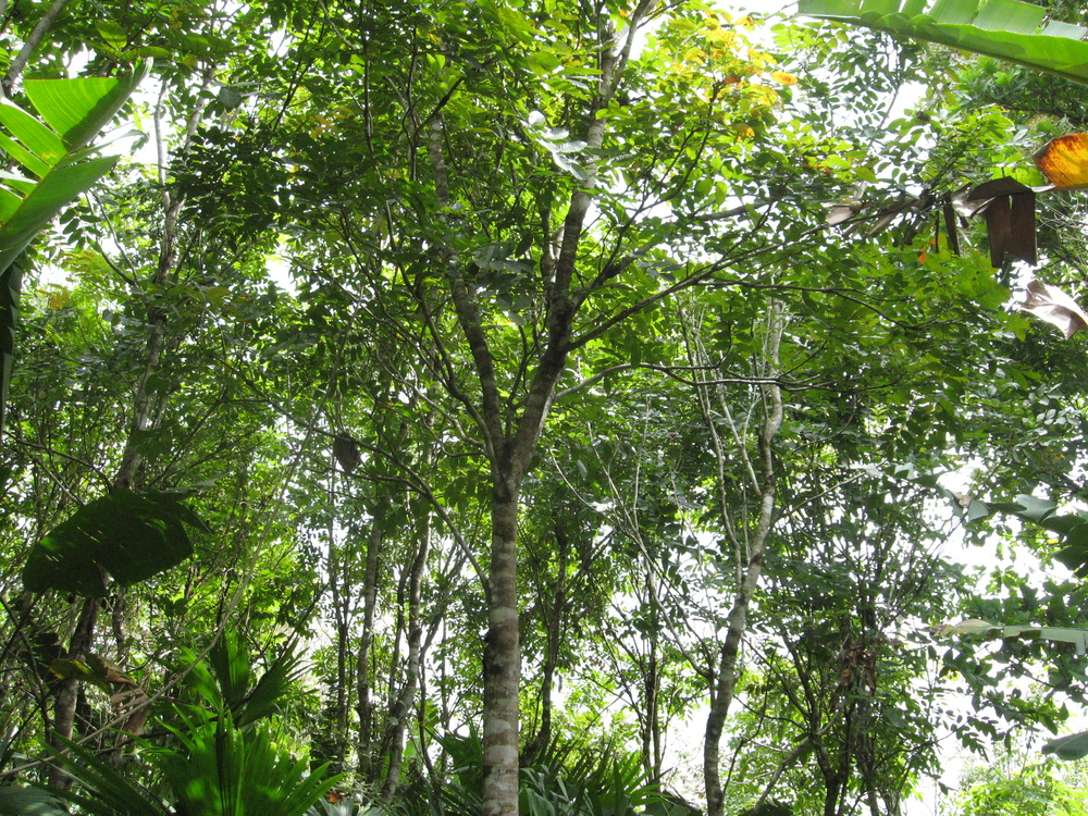 Secondary growth forest in Panama
