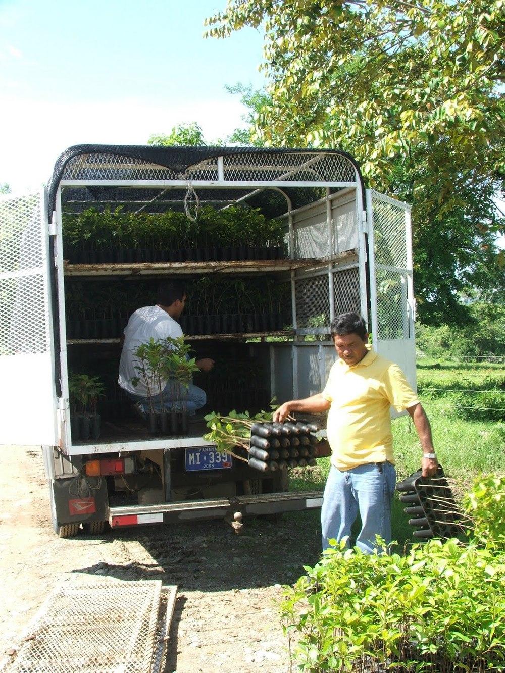 prorena-saplings