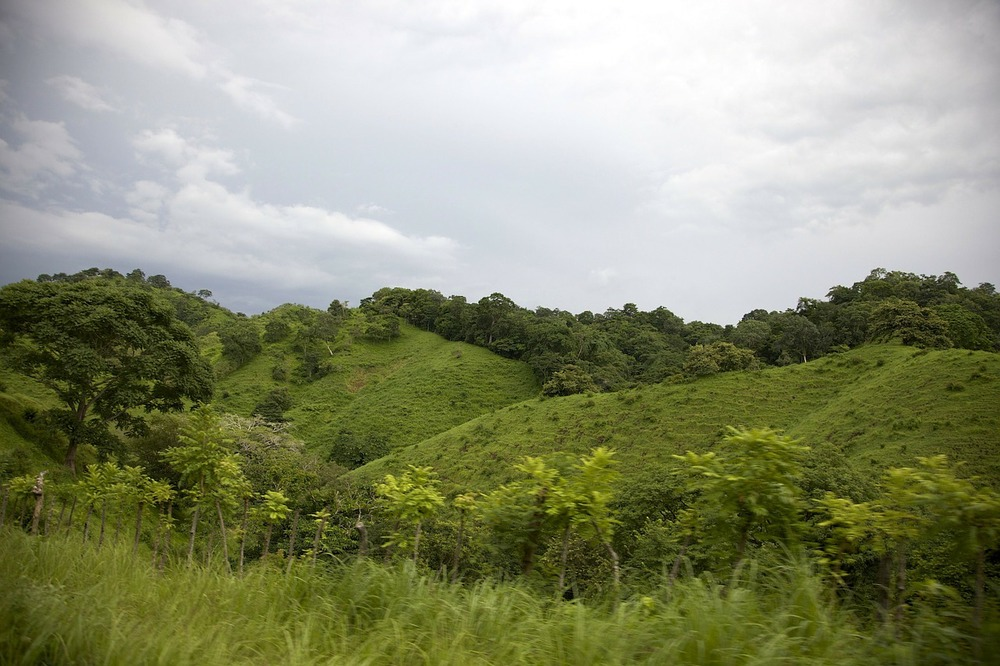 Deforestation and conversion to cattle pasture in Panama