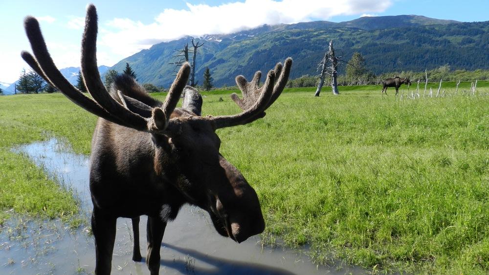 Alaska01.jpg