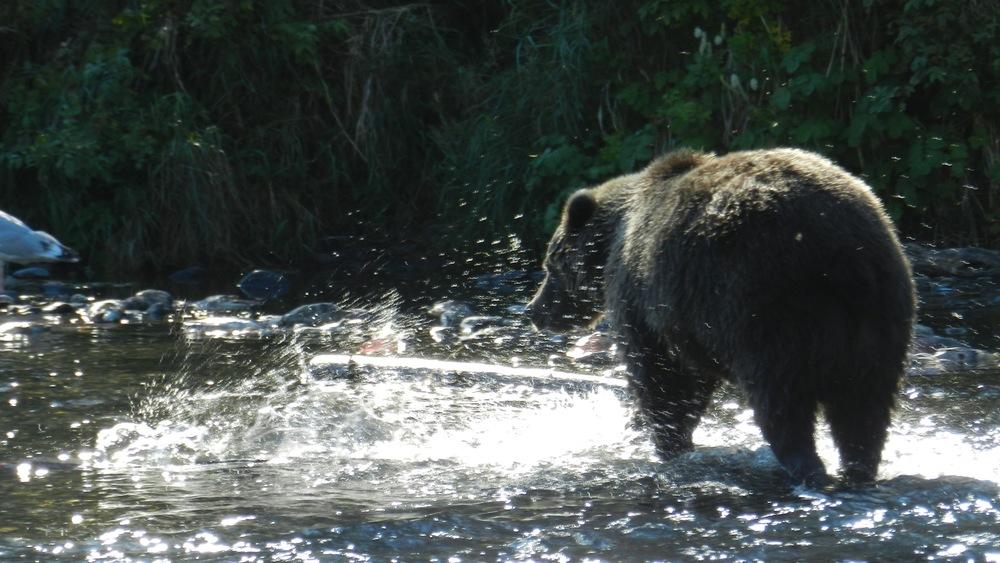 Alaska29.jpg