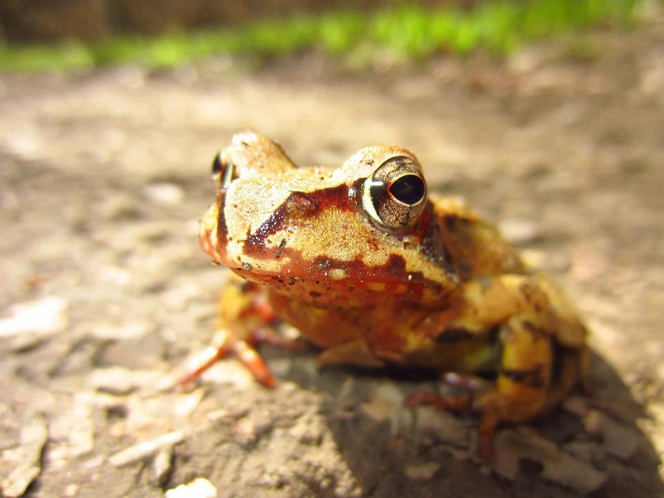 frog-216331_960_720.jpg