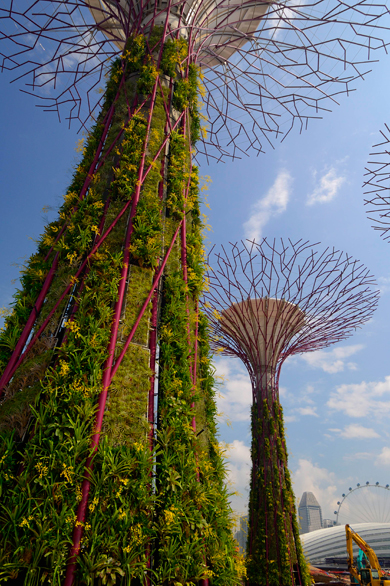 Supertrees 1.jpg
