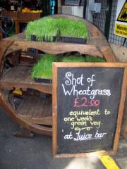jesswheatgrass.jpg