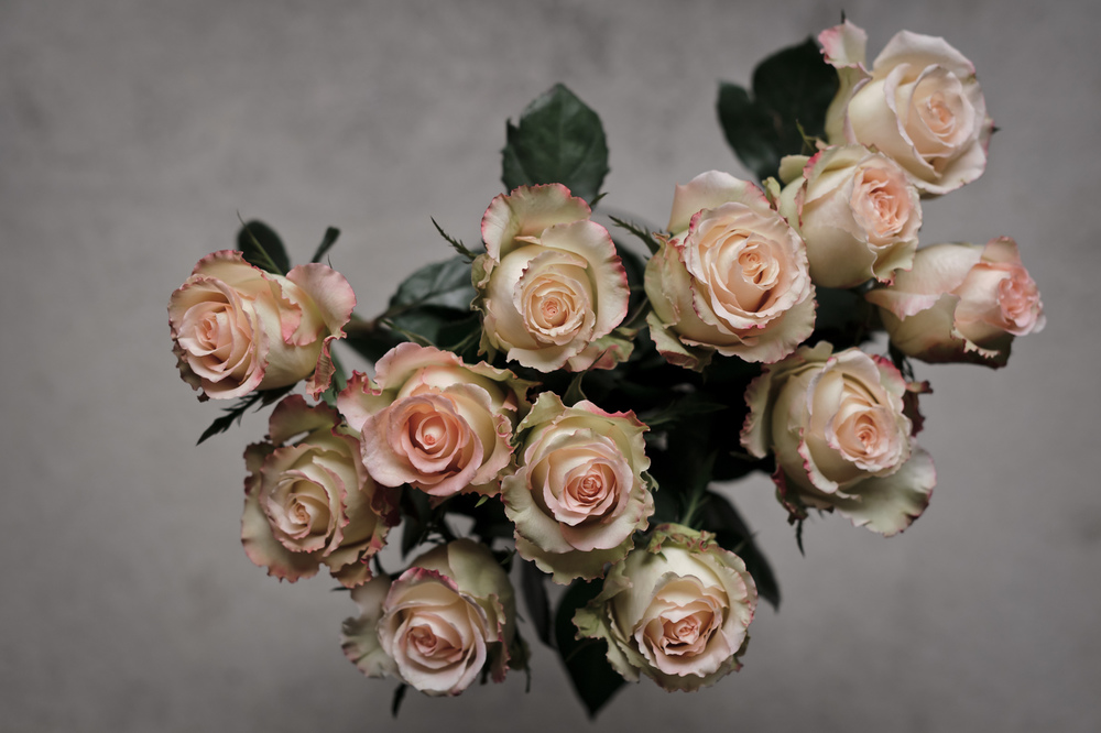 2013_02_04_Duette_Whole_Trade_Roses.jpg