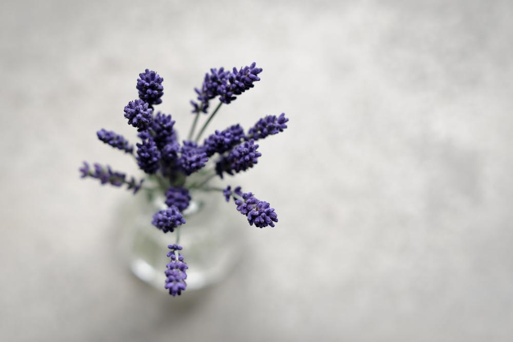 2013_06_21_'Hidcote'_Lavender.jpg