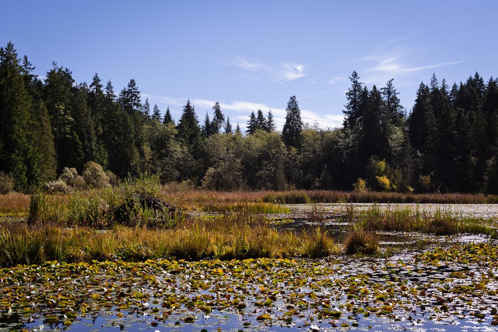 2013_10_06_Beaver_Lake_02.jpg