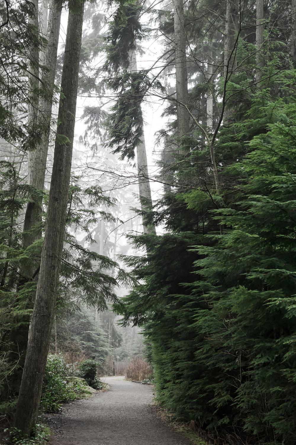 2014_01_26_Stanley_Park_Fog_Trail.jpg