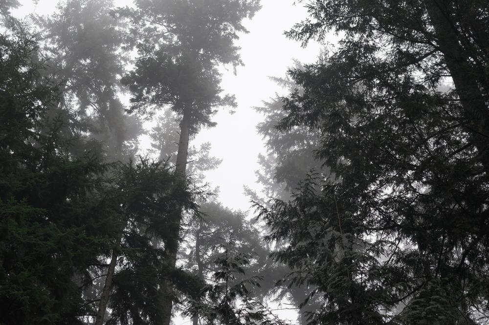 2014_01_26_Stanley_Park_Fog_Trees_01.jpg
