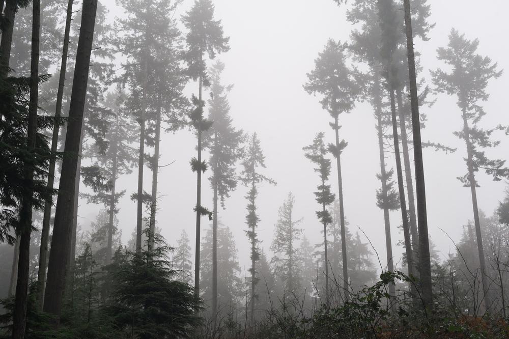 2014_01_26_Stanley_Park_Fog_Trees_02.jpg