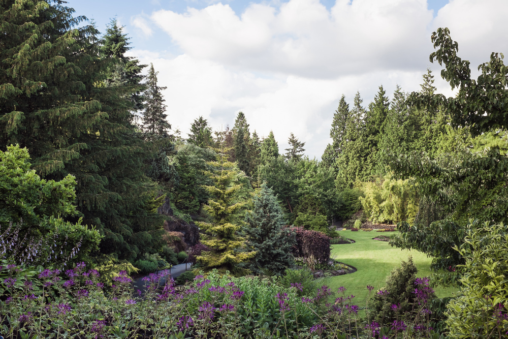 Large Quarry Garden, Queen Elizabeth Park, June 29, 2014