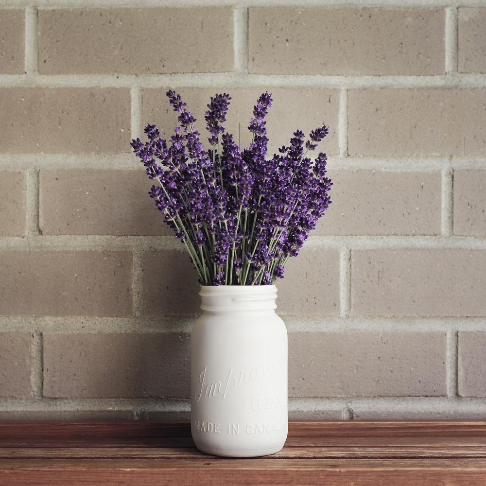 2014_07_04_'Hidcote' Lavender