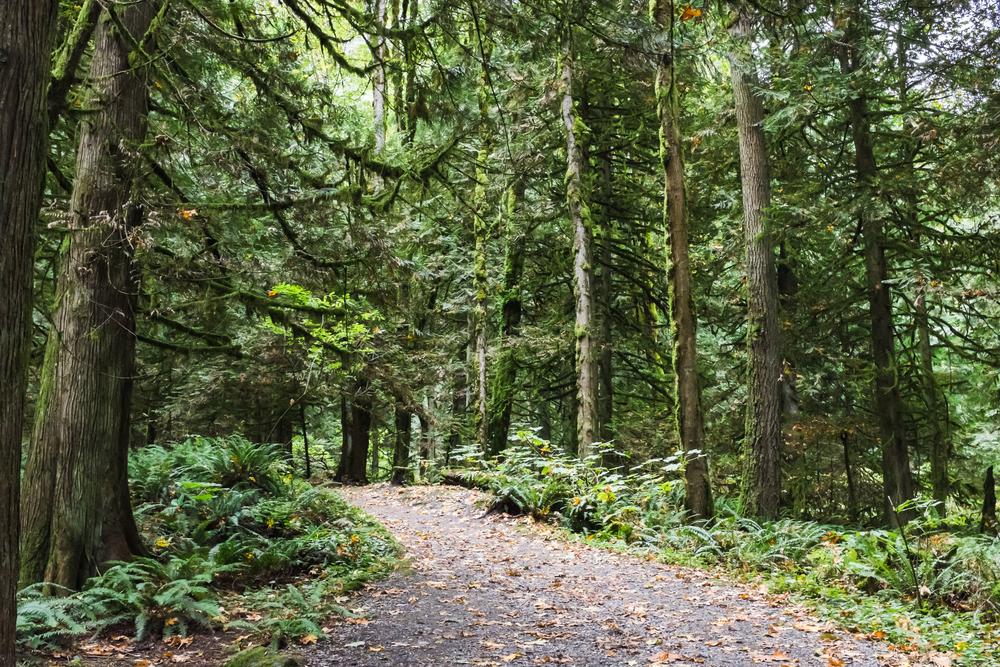 Bridal Veil Falls Provincial Park, October 12, 2014