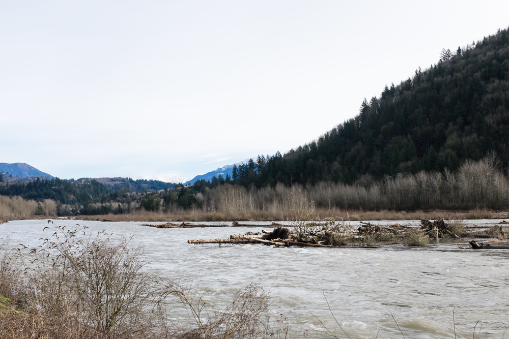 Vedder River viewed from the Rotary Trail