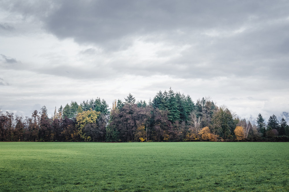Green and grey in Chilliwack