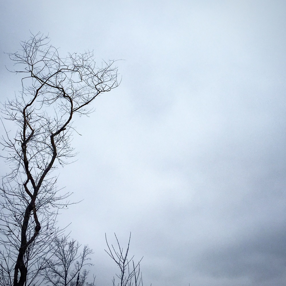 Lonely Bare Trees