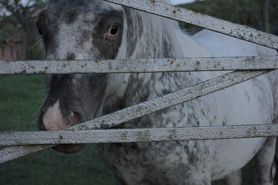 Pony Nicolas Gruszka.jpg