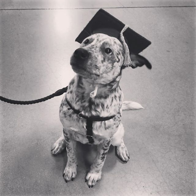 Our graduate 🎓 🐶