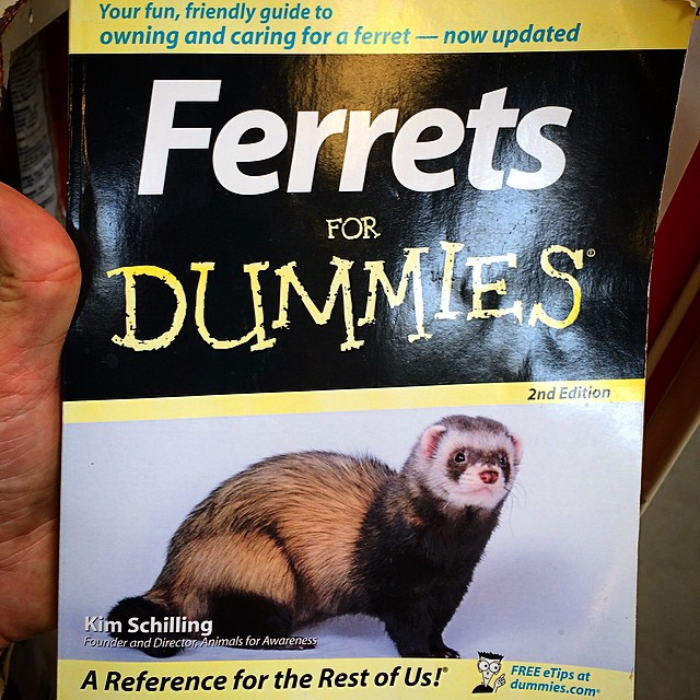 I might be alone on this, but I just don't think Dummies should own Ferrets.