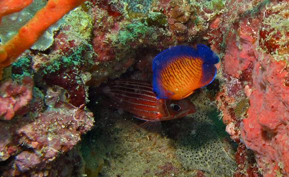 BernardDupont_Fish.png